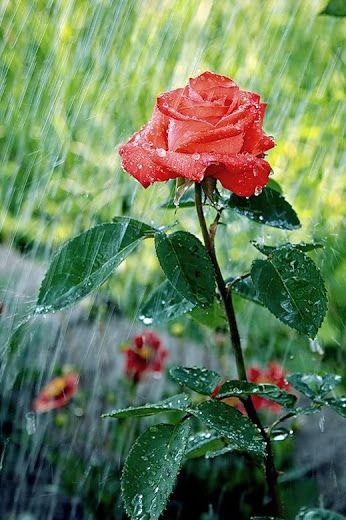 Sonriendo bajo la lluvia. :):