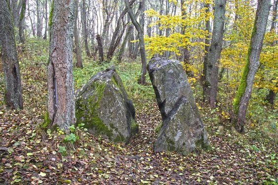 Камень Лжи в лесу Пионерского. Фото: Evgenia Shveda