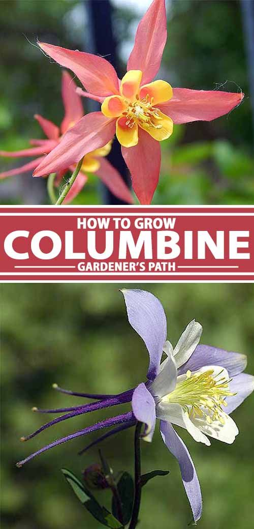 Pin On Gardener S Path