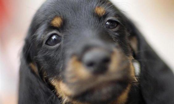 #Wuff Wuff Hurra! Heute ist Welthundetag! - Mittelbayerische: Mittelbayerische Wuff Wuff Hurra! Heute ist Welthundetag! Mittelbayerische…