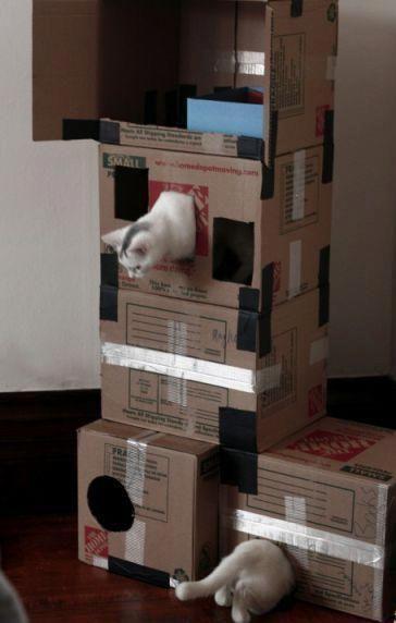 die längste Katze der Welt.