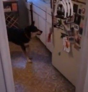 Smart Dog – Awesome Video!