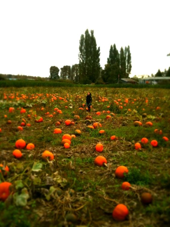 Everything Autumn and Halloween