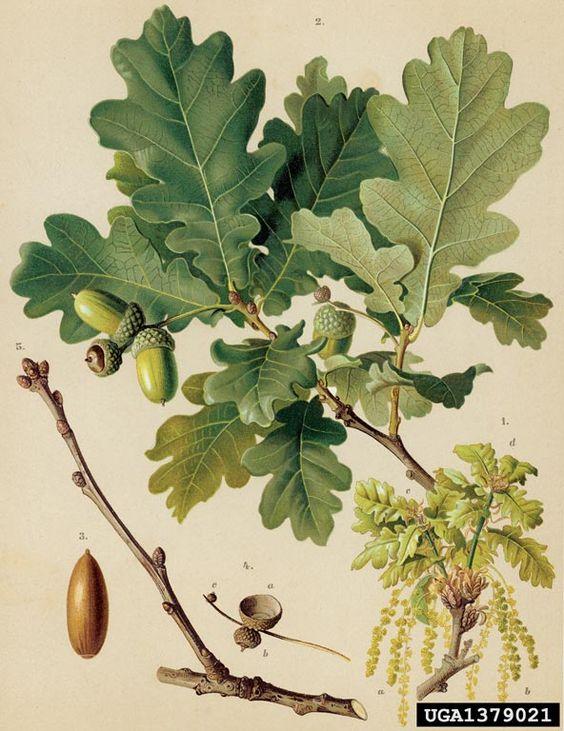 Illustration botanique feuilles and anglais on pinterest - Tableau vegetal jardiland ...