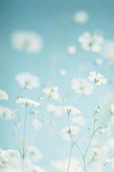 Mooie witte bloemetjes: