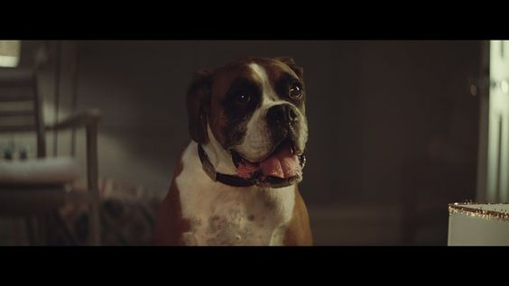 his year's John Lewis ad was a distinct departure from the retailer's usual tried-and-trusted festive template, but it still packed an emotional punch.