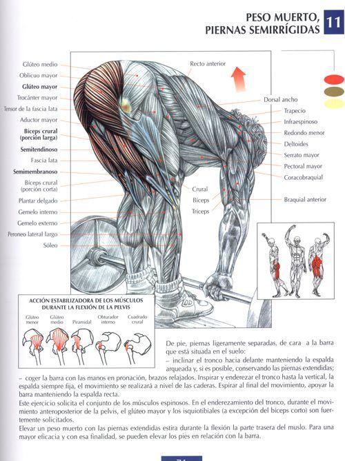 Rutina de ejercicios para cada grupo muscular