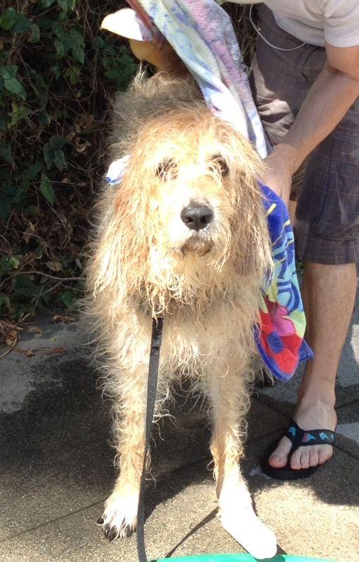 Deep Cleansing Dog Body Wash Pet Grooming Body Wash Organic Dog