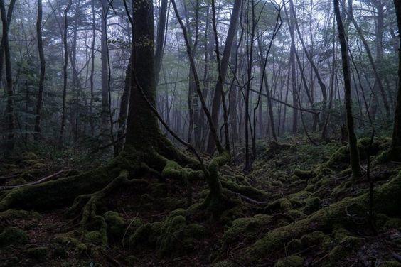 Aokigahara, el bosque de los suicidas C92bffc835a031fcfb29472060316c79