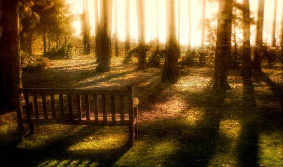 Wisley Gardens, Surrey
