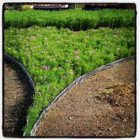 Heart Flower Garden