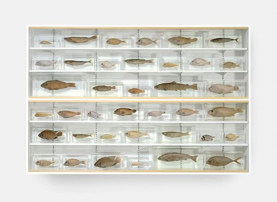 Damien Hirst Isolated Elements Swimming in the Same Direction for the Purpose of Understanding (Left), 1991