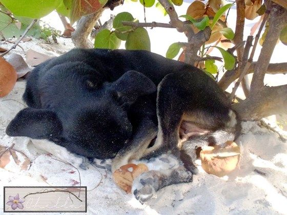 For the love of the voiceless homeless of Nassau, Bahamas | Pet Expenses - YouCaring.com