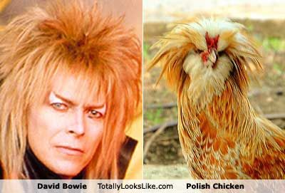 David Bowie totally looks like a Polish Chicken