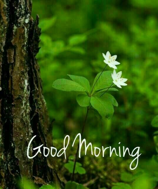 Pin By Fay Yochum On Greetings Morning Images Good Morning Images Flowers Good Morning Nature