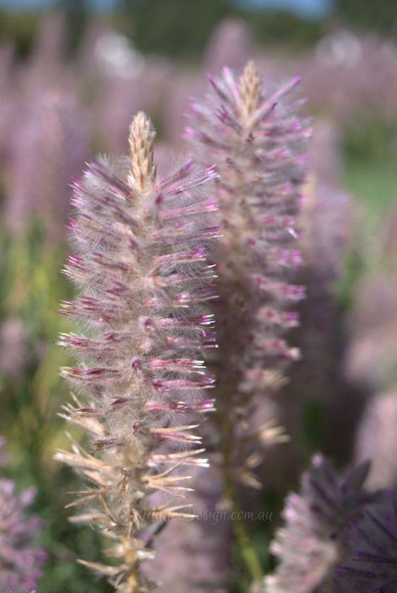Stunning Arid Plant