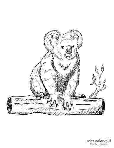 Cute Koala Coloring Pages 10 Free Cute Koala Coloring Pages Coloring Page Print Bear Coloring Pages Cute Coloring Pages Dog Coloring Page