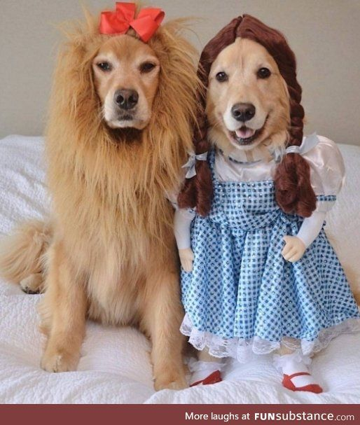 Daily Dose Of Cute October 2 Cute Dog Costumes Pet Halloween