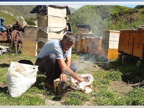 ▶ DER IMKER | Trailer german deutsch [HD] - YouTube This is the trailer to a Swiss movie about a Kurdish beekeeper. Beautiful but still a bit heartbreaking...just as Kurdish history.