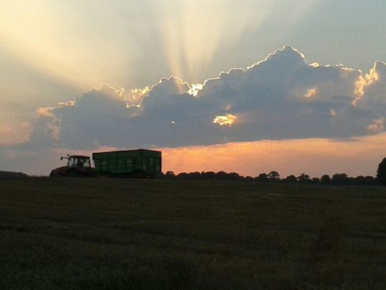 Ernte&Sonnenuntergang