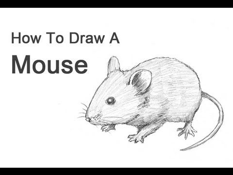 Visit http://www.How2DrawAnimals.com or my channel for more animal ...