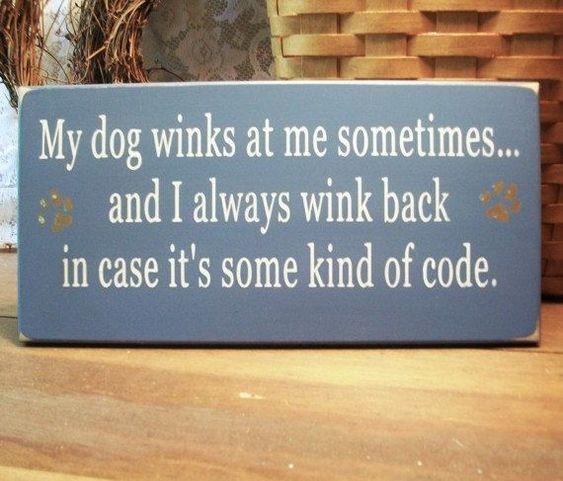 Meu cão, às vezes, pisca pra mim ... e eu sempre pisco de volta. É o nosso código.