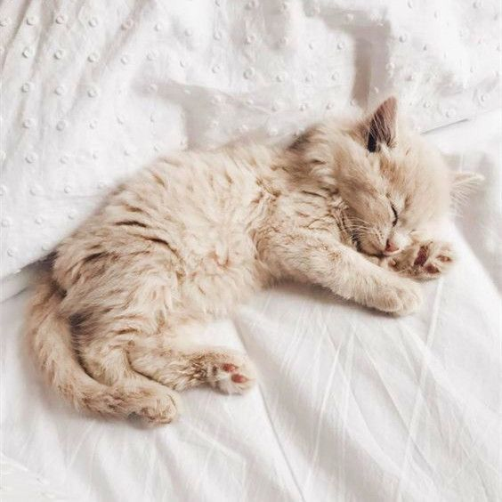 Adorable Kitten Kittens Cutest Newborn Kittens