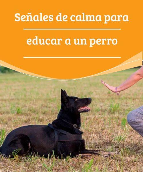 Señales De Calma Para Educar A Un Perro Mis Animales Educar A Un Perro Entrenamiento Perros Consejos Para Entrenamiento De Perros