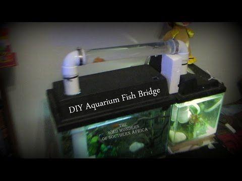 Get The Ultimate Diy Book Http Thekingofdiy Com Aquarium Bridge Follow Me Http Facebook Com Uarujoey In This Diy Aquarium Homemade Aquarium Fish Tank