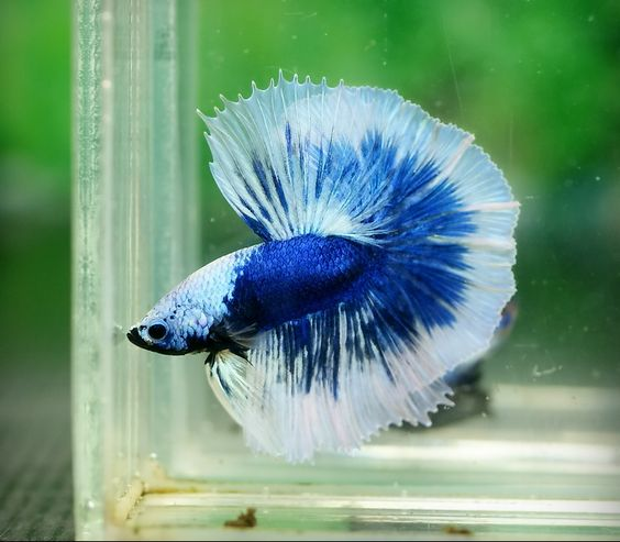 1000 ideas about cool fish on pinterest aquarium fish for Cool betta fish names