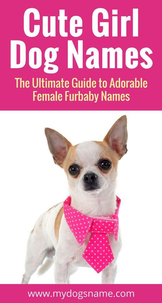 Names Funny Dog Names Girl Dog Girl Dog Names