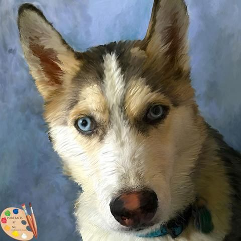 Husky Dog Portrait 407 Painted Dog Portraits By Portraits By Nc