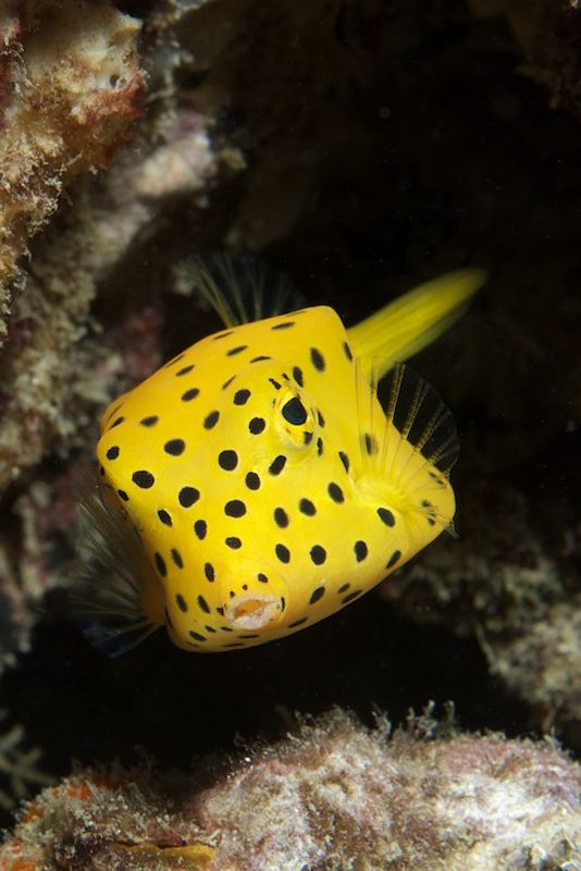 Go Diving In Thailand On The Thailand Aggressor Liveaboard Cute Fish Beautiful Sea Creatures Marine Fish