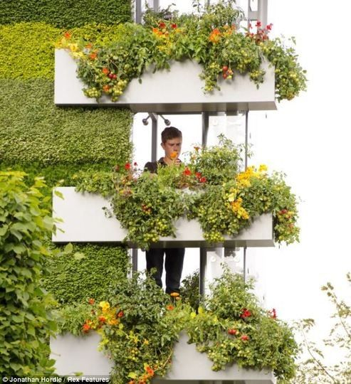 13 Best Hanging Planters Images On Pinterest | Hanging Basket, Hanging  Gardens And Vertical Gardens