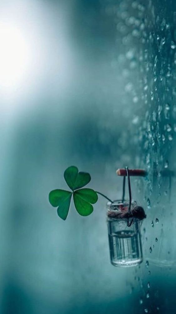 Pin By Lindrey On Pictures Rainy Wallpaper Cool Pictures For Wallpaper Miniature Photography