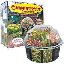 Grow 10 types of carnivorous plants from seeds with this complete kit for sale here. Fly traps, Pitcher plants, Sundews and all supplies.