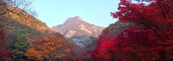 Rừng của Naejangsan chuyển màu khi thu về