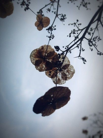 Monotone season