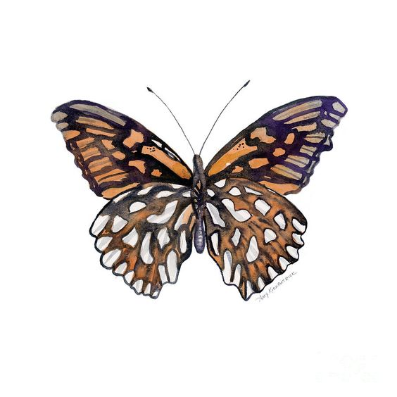 Mexican Silver Spot Butterfly Painting - 9 Mexican Silver Spot Butterfly by Amy Kirkpatrick