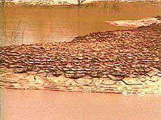Caatinga e Restinga: No semi-árido também há morada