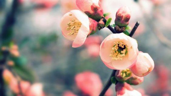 http://vandelaydesign.com/blog/galleries/spring-wallpaper/