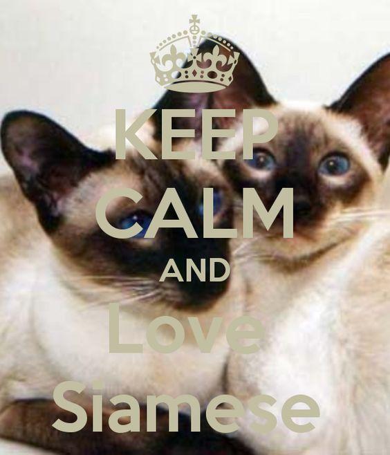 KEEP CALM AND Love Siamese