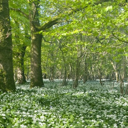Dedicate woodland - an acre
