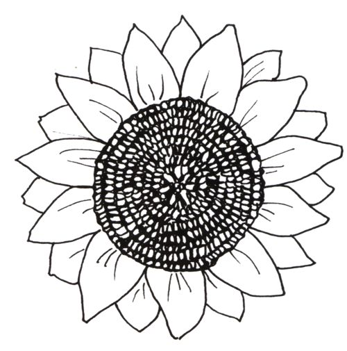 Line Art Sunflower : Sunflowers coloring pages and sunflower design on pinterest