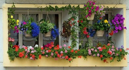 Stunning window box and hanging baskets display.