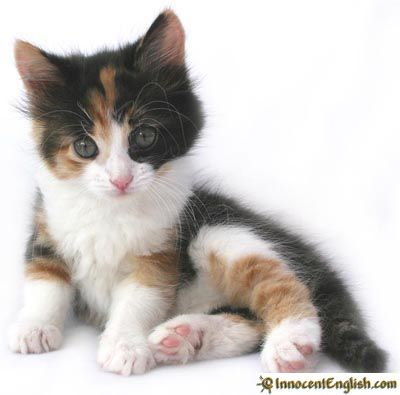 Cute and Funny Kittens