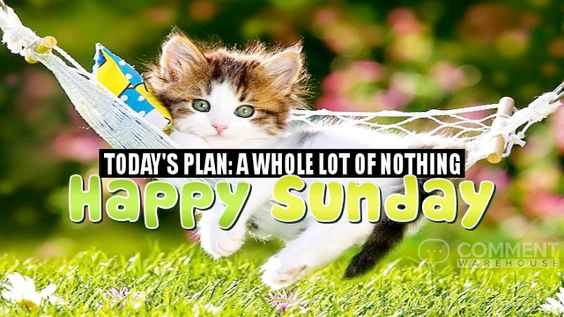 Happy Sunday Today's Plan A Whole Lot of Nothing   Sunday Graphics   Days of the Week Graphics Happy Sunday Images Pics Comments Kitten Graphics Greetings