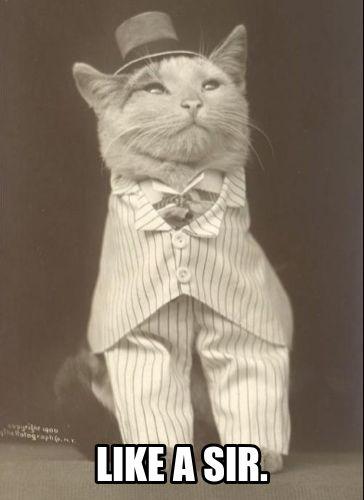 Cat like a sir