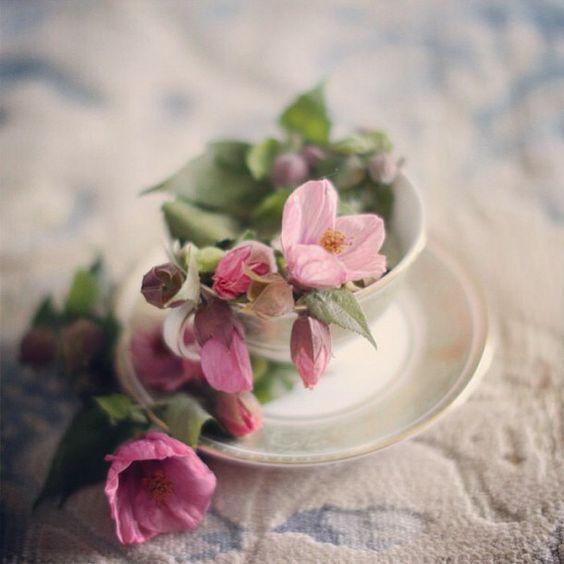 Naturaleza mas allá del jardín- flores en taza de te