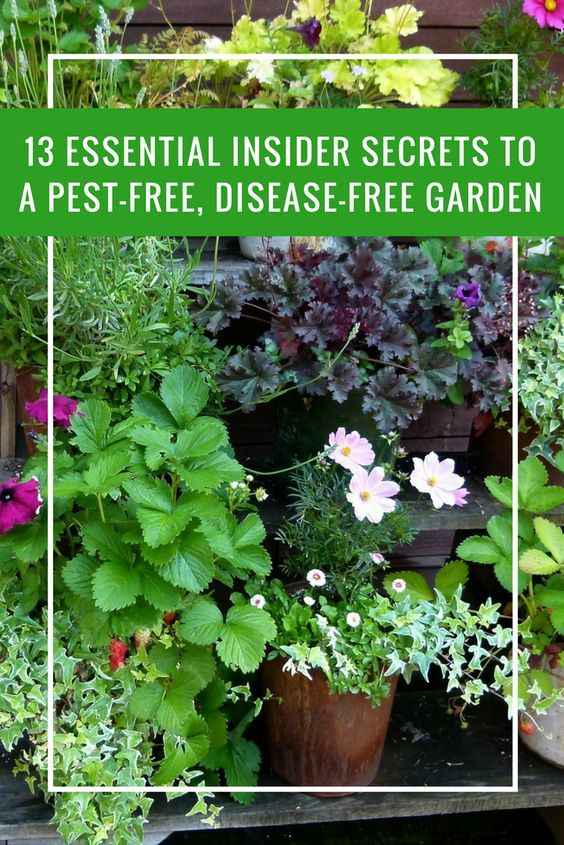 10 Natural Pesticides For Your Garden You Just Have To Try Natural Pesticides Organic Pesticide Garden Guide